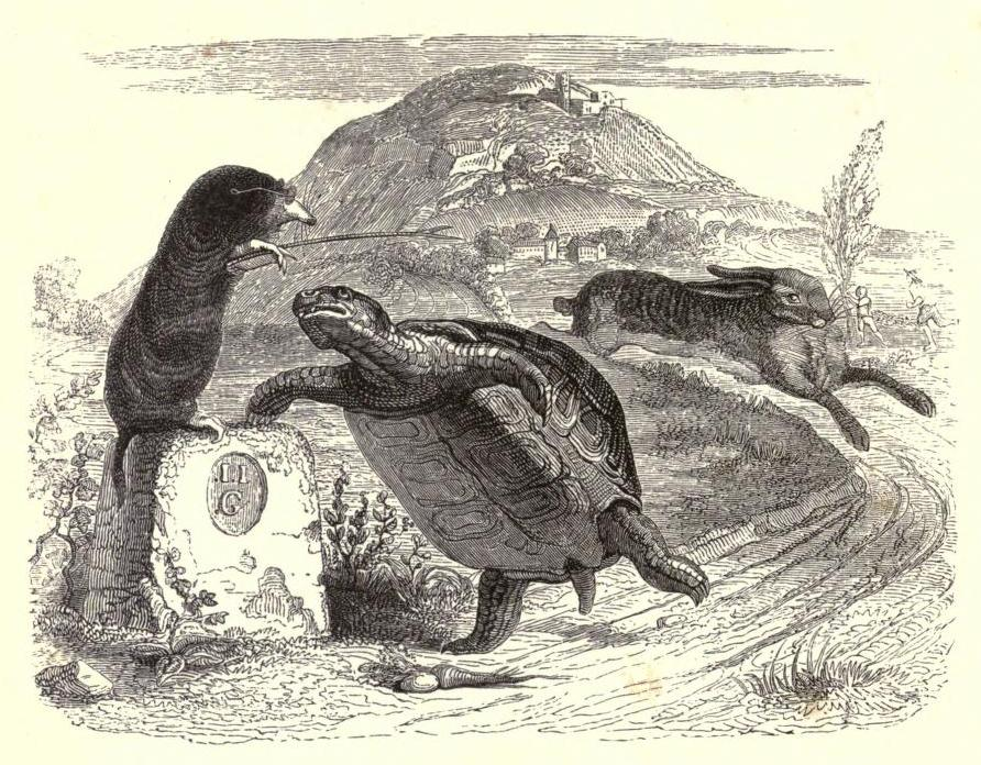 The Tortoise and the Hare (J.J. Grandville, 1855)